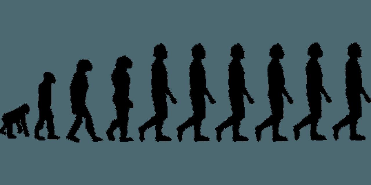 evolución ser humano en la Historia